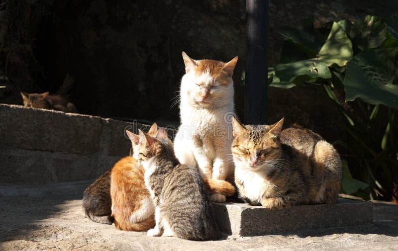 коты получают warmmer стоковая фотография