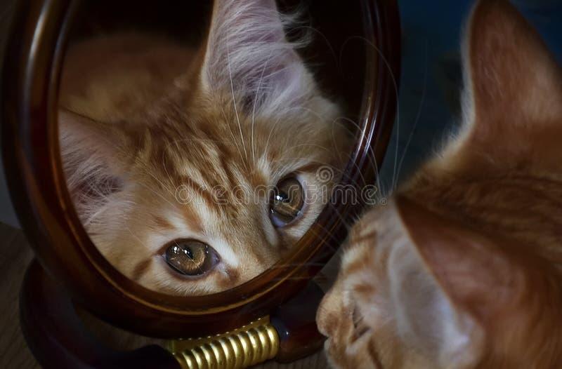 Коты, симпатичные пушистые любимчики стоковая фотография rf