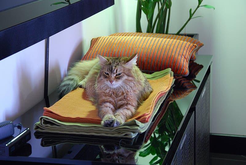 Коты, симпатичные пушистые любимчики стоковая фотография