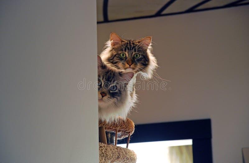 Коты, симпатичные пушистые любимчики стоковое фото