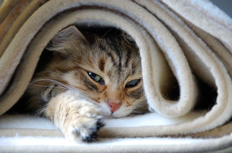 Коты, симпатичные пушистые любимчики стоковое изображение