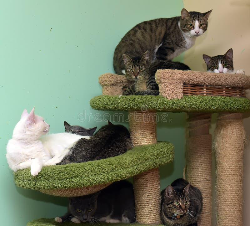 Коты совместно на циновке на приюте для животных на спортивной площадке для котов стоковые изображения