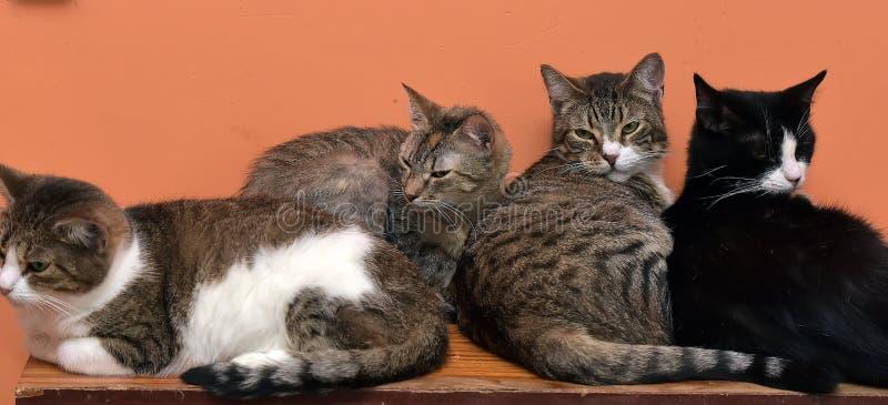 Коты совместно на циновке на приюте для животных стоковые изображения