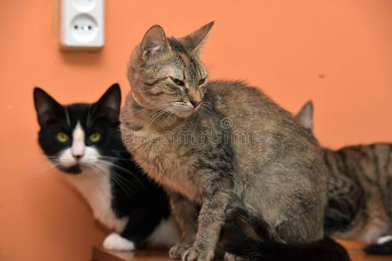 Коты совместно на циновке на приюте для животных стоковые фото