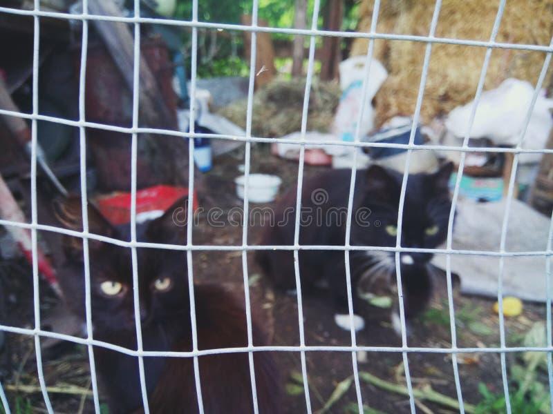 Коты страны стоковое изображение rf