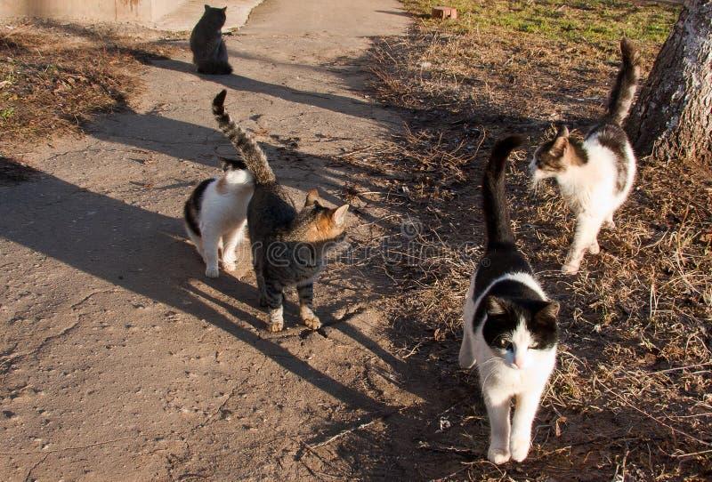 Коты любимчика игр весны стоковое изображение