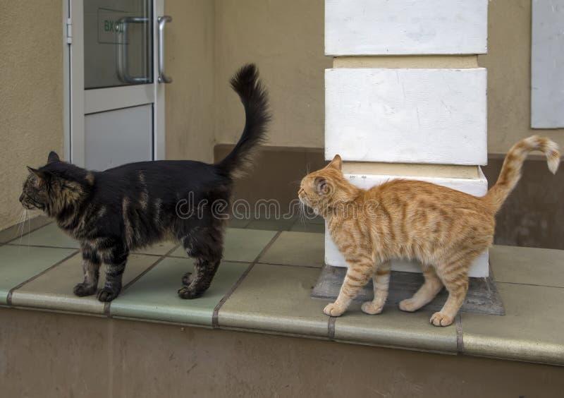 Коты любимчика игр весны стоковая фотография rf
