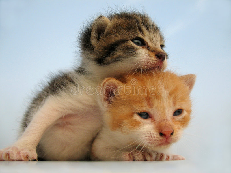 коты стоковое фото