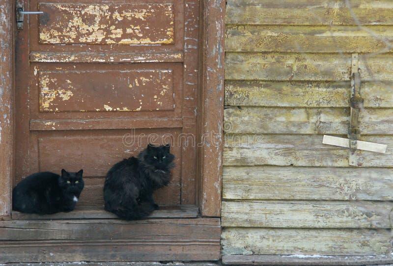 коты стоковое изображение