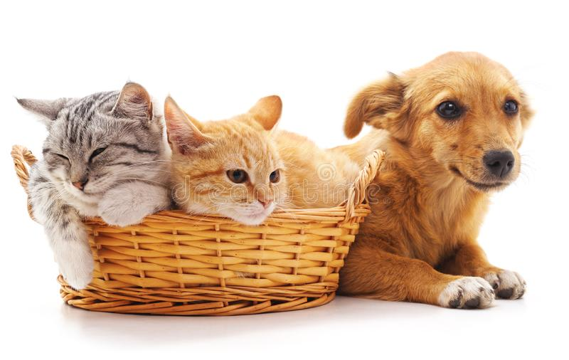 Котята в корзине и щенок стоковая фотография rf