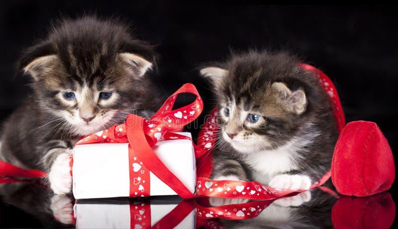 Котята и подарок Tvo маленькие стоковые фотографии rf