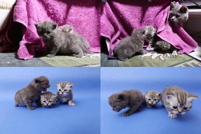 Котята младенца играя на mauve предпосылке, multicam стоковое фото