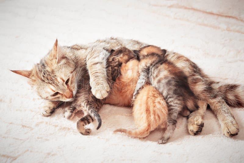 Котята младенца ухода кота матери стоковая фотография