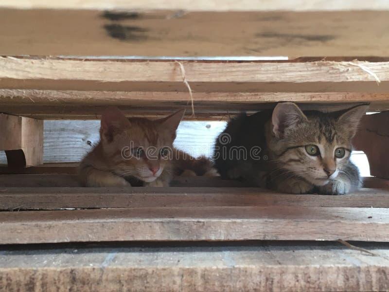 Котята младенца стоковые фото