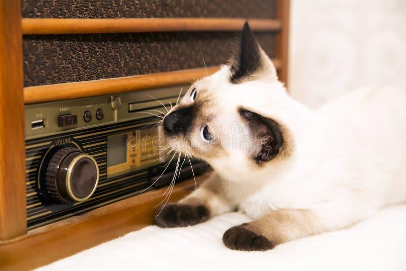 Котята могут также насладиться музыкой стоковое изображение rf