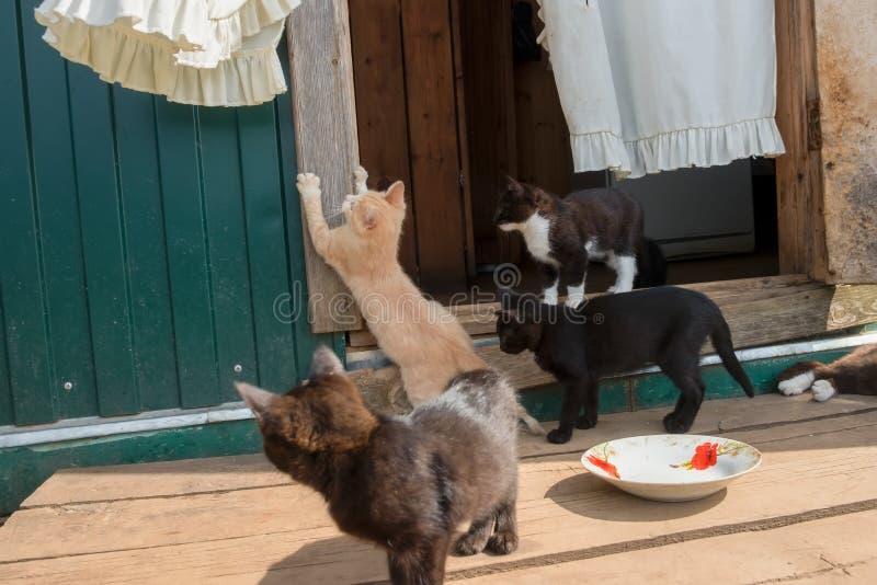 Котята перед входом сельского дома стоковые фотографии rf
