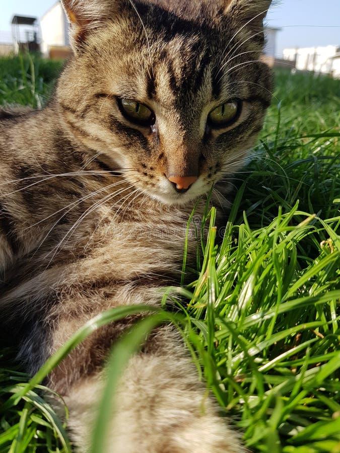 котята сада стоковая фотография
