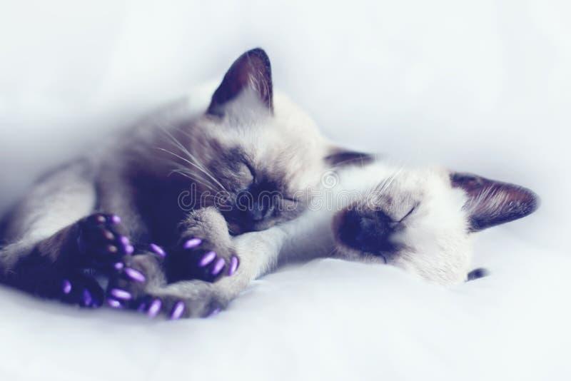 Котята спать стоковое фото