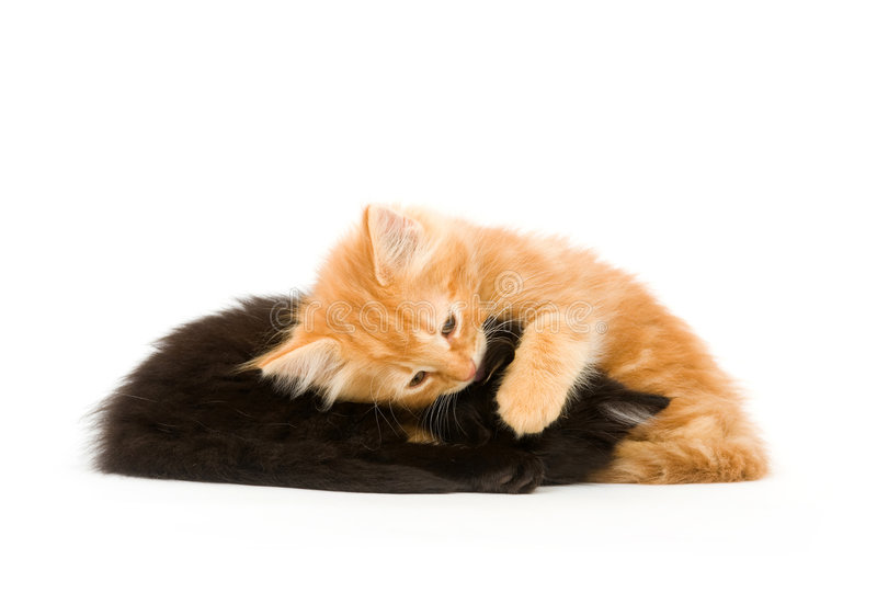 Download котята утомляли 2 стоковое изображение. изображение насчитывающей бело - 6869957