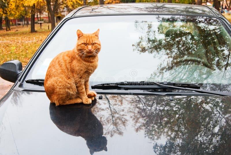 кот автомобиля стоковое изображение