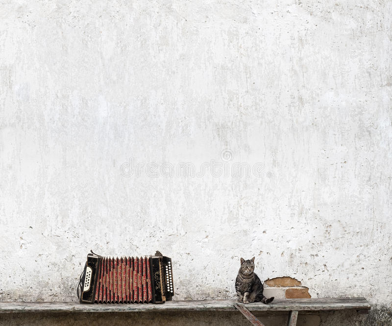 Кот аккордеона и tabby стоковые фото