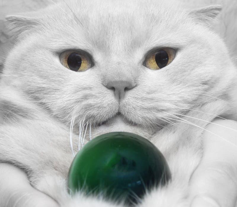 Кот белизны конца-вверх стоковые фото