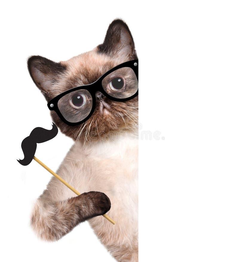 Download Кот битника стоковое изображение. изображение насчитывающей панель - 41659981