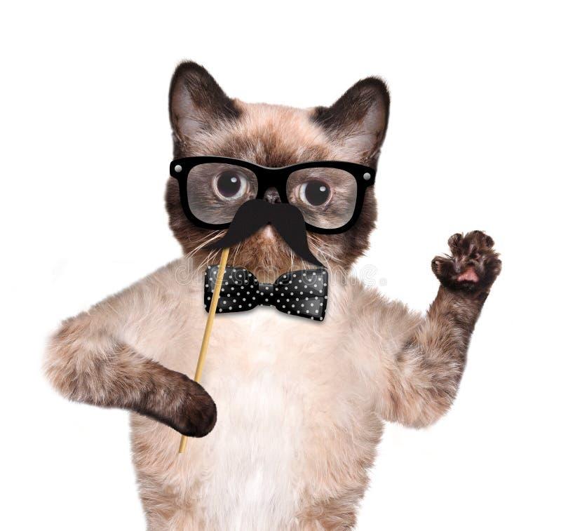 Download Кот битника стоковое изображение. изображение насчитывающей знамена - 41659987