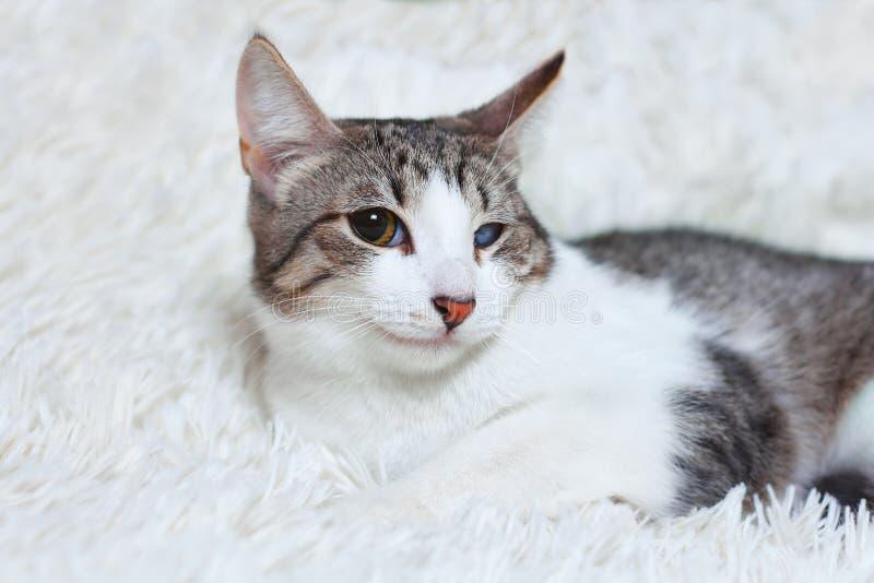 Кот больной, раненый, спасенный от улиц города, взгляды с недоверием, страхом Любимчики дня мира, концепции для животного укрытия стоковая фотография