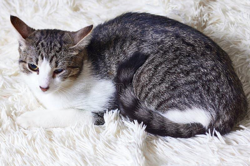 Кот больной, раненый, спасенный от улиц города, взгляды с недоверием, страхом Любимчики дня мира, концепции для животного укрытия стоковое фото