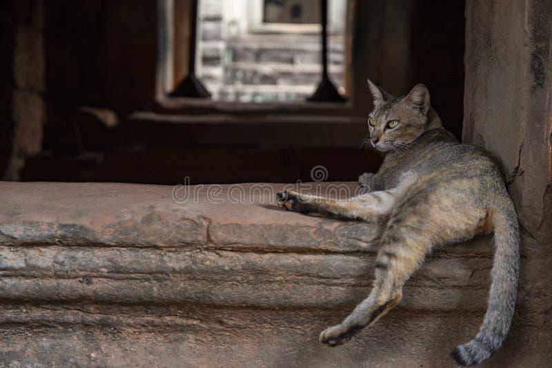 Кот Брауна в древнем храме, Angkor Wat, Камбодже Ленивый кот отдыхая на историческом здании Фото Angkor Wat туристское стоковые фото
