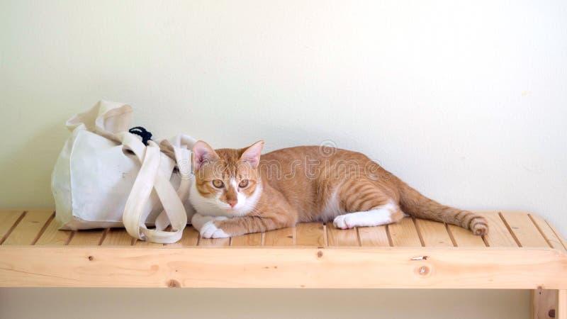 Кот Брауна лежа около сумки tote на стуле, кот посмотрел вне окна стоковая фотография