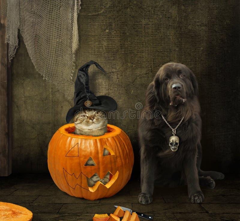Кот внутри тыквы и его собаки стоковая фотография