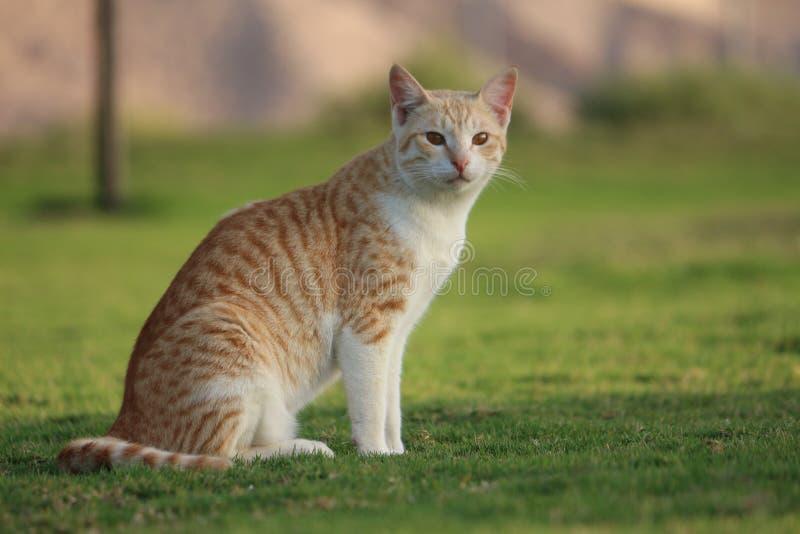 Кот вытаращиться стоковое фото rf