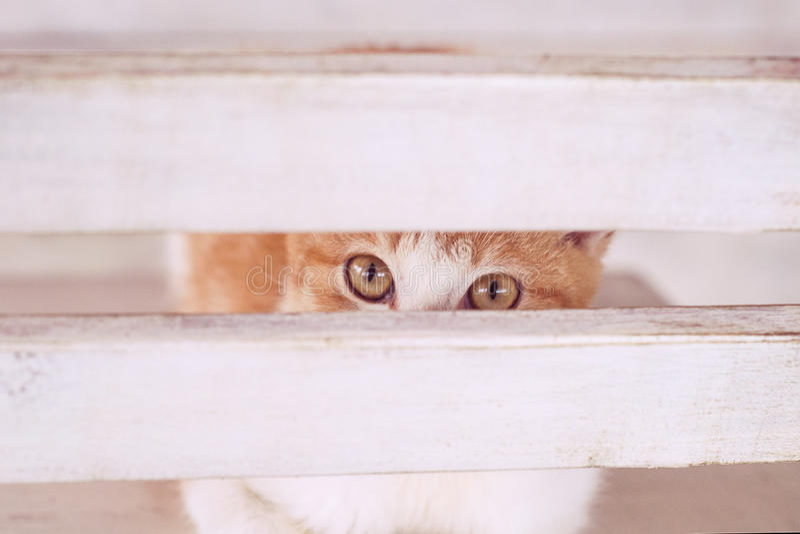 Кот в белом интерьере на chear стоковые фотографии rf