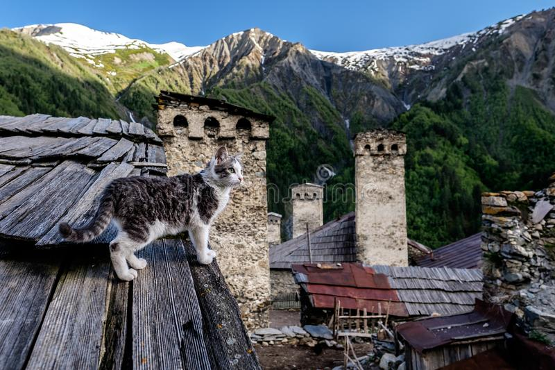 Кот в деревне Adishi в Svaneti, Georgia стоковые изображения rf