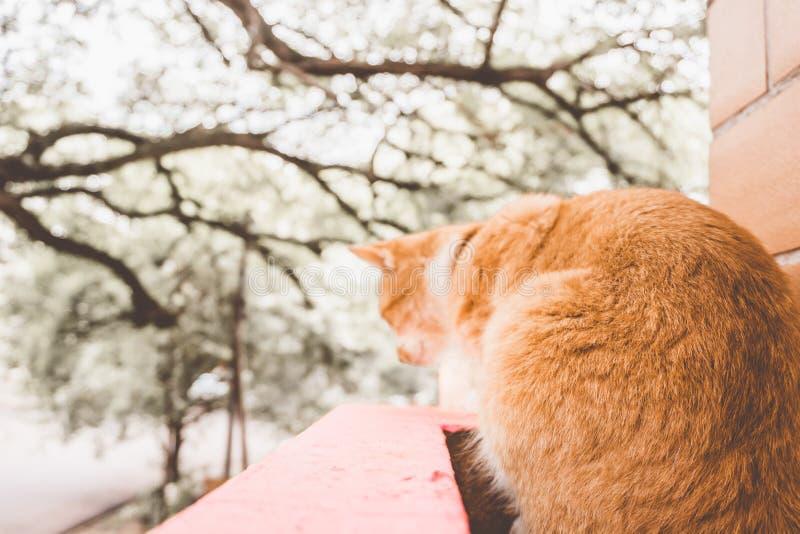 Кот в доме стоковое изображение rf