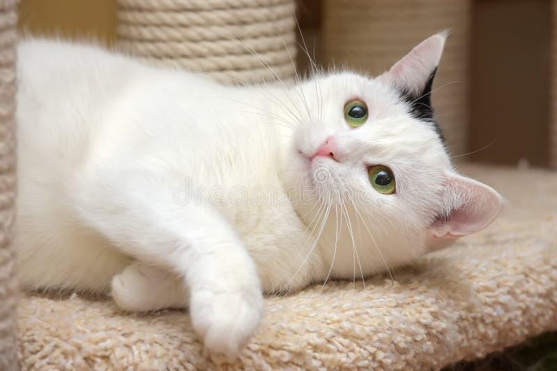 Кот в доме кота с шабером стоковые изображения rf