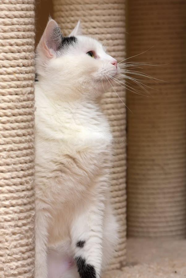 Кот в доме кота с шабером стоковое фото