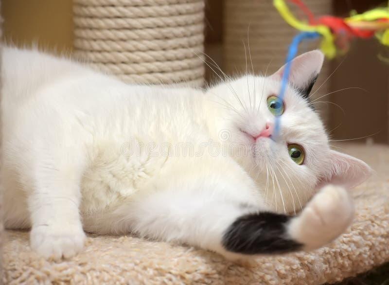 Кот в доме кота с шабером стоковое изображение