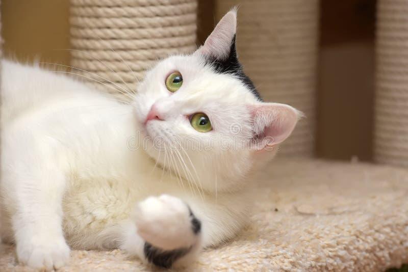 Кот в доме кота с шабером стоковые изображения