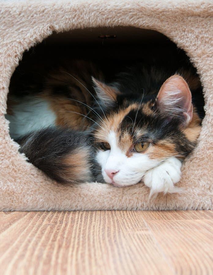 Кот в ее коробке стоковое фото rf