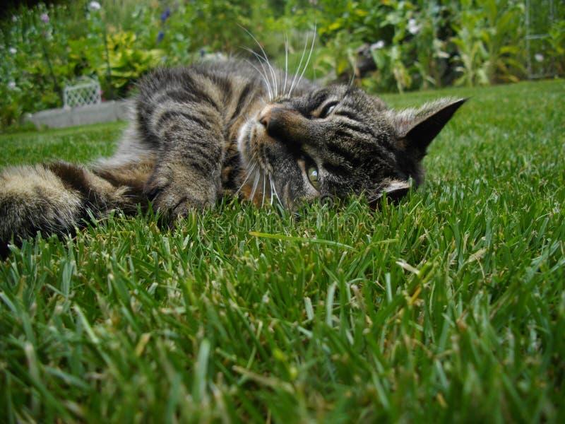 Кот в зеленом рае стоковая фотография
