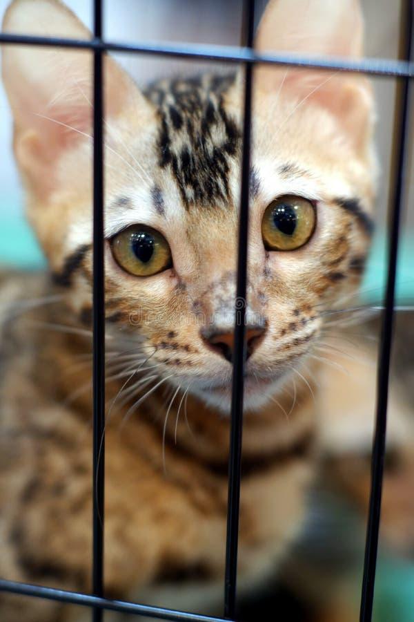 Кот в клетке 2 стоковые изображения