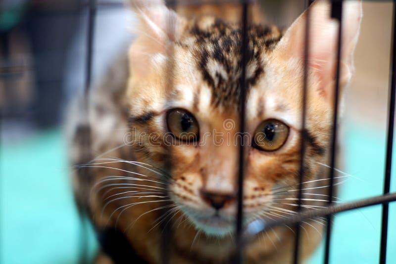 Кот в клетке стоковая фотография