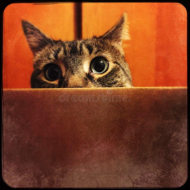 Кот в коробке стоковые фотографии rf
