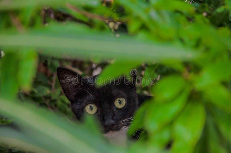 Кот в кусте стоковое изображение rf