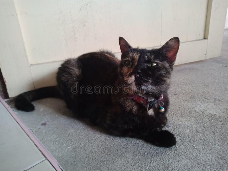 Кот в моей комнате стоковые изображения