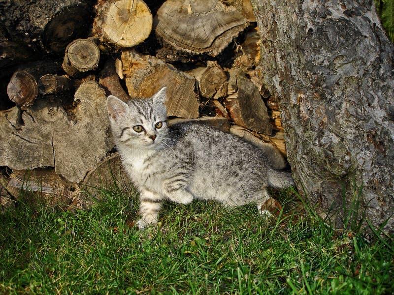 Download Кот в саде стоковое фото. изображение насчитывающей мило - 40585230