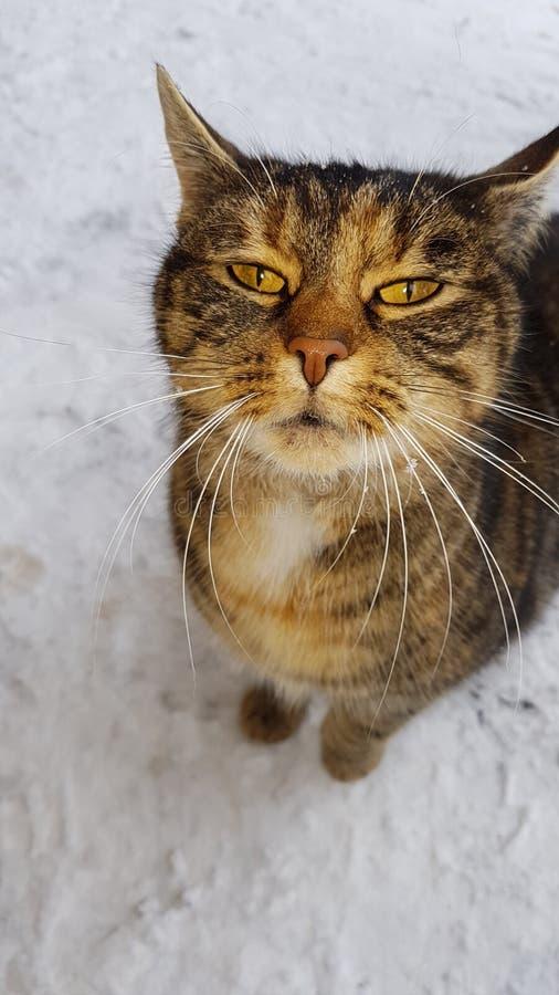 Кот в снеге стоковое изображение